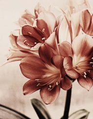 Rizin papir sa cvetnim motivom